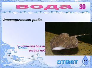 Электрическая рыба. У потолка больше пара, так как горячий воздух поднимается