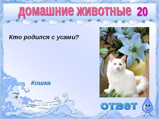 Кто родился с усами? Атмосфера Кошка