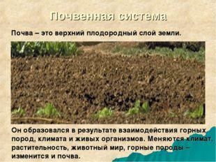 Почвенная система Почва – это верхний плодородный слой земли. Он образовался