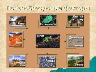 Почвообразующие факторы