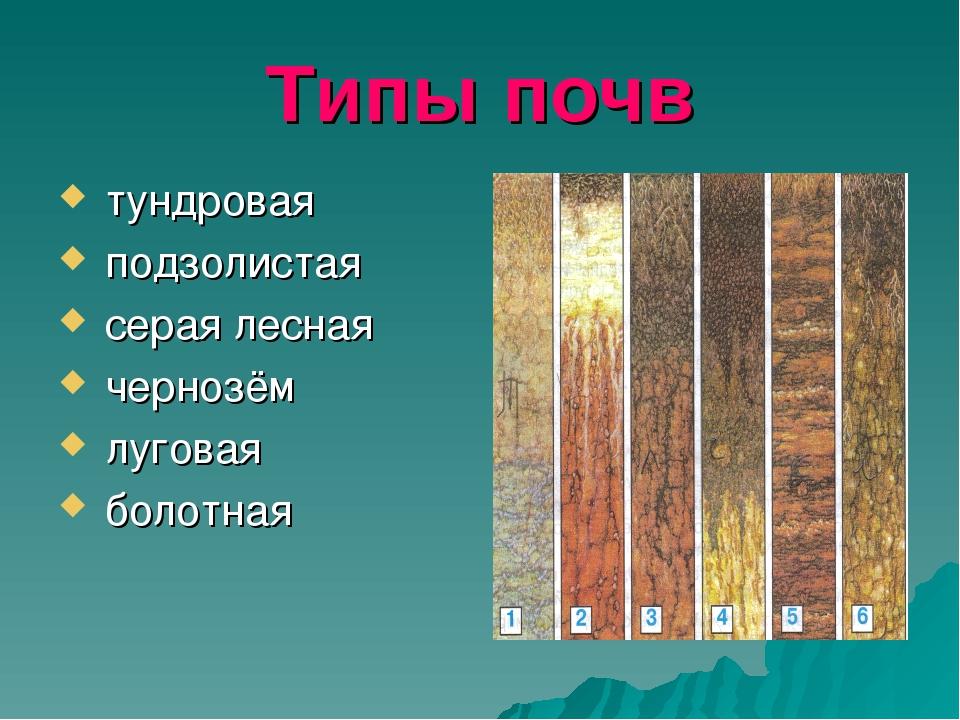 Типы почв тундровая подзолистая серая лесная чернозём луговая болотная