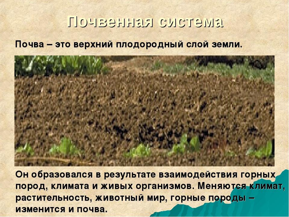 Почвенная система Почва – это верхний плодородный слой земли. Он образовался...