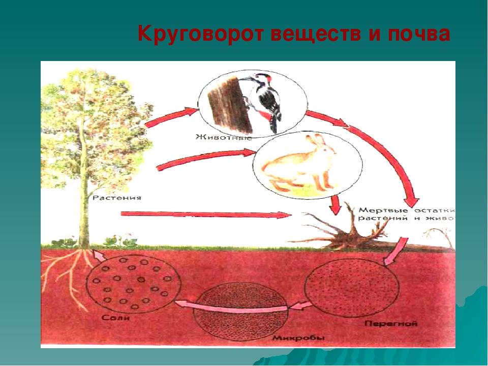 Круговорот веществ и почва