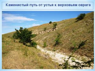 Каменистый путь от устья к верховьям оврага