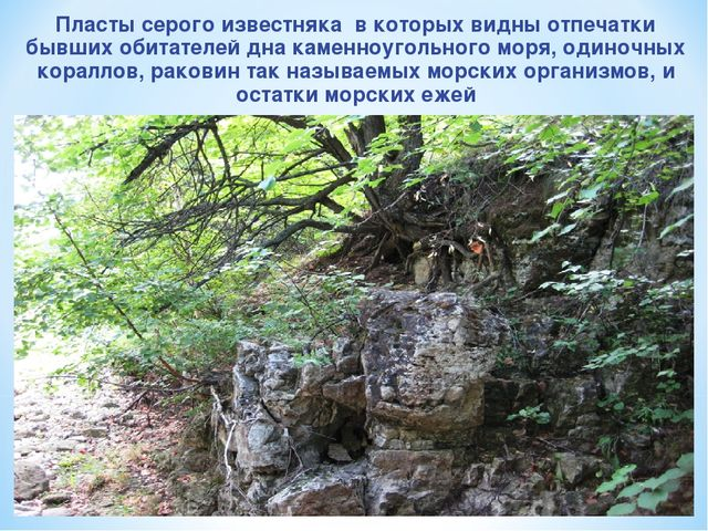 Пласты серого известняка в которых видны отпечатки бывших обитателей дна каме...