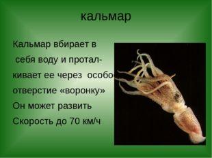 кальмар Кальмар вбирает в себя воду и протал- кивает ее через особое отверсти