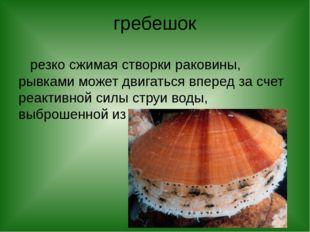 гребешок резко сжимая створки раковины, рывками может двигаться вперед за сче