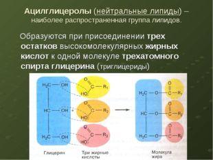 Ацилглицеролы (нейтральные липиды) – наиболее распространенная группа липидов