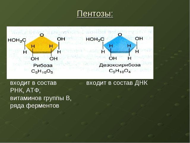 Пентозы: входит в состав РНК, АТФ, витаминов группы В, ряда ферментов входит...