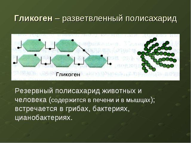 Гликоген – разветвленный полисахарид Резервный полисахарид животных и человек...