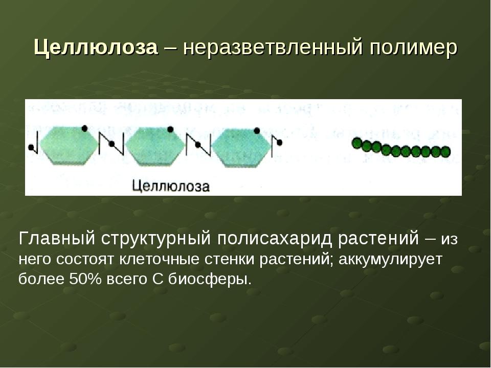 Целлюлоза – неразветвленный полимер Главный структурный полисахарид растений...