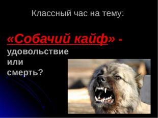 «Собачий кайф» - удовольствие или смерть? Классный час на тему: