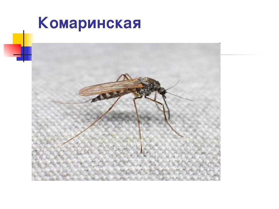 Комаринская