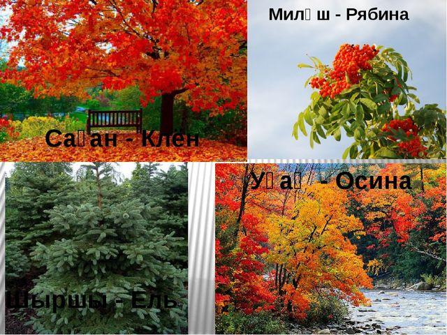 Саған - Клён Миләш - Рябина Шыршы - Ель Уҫаҡ - Осина
