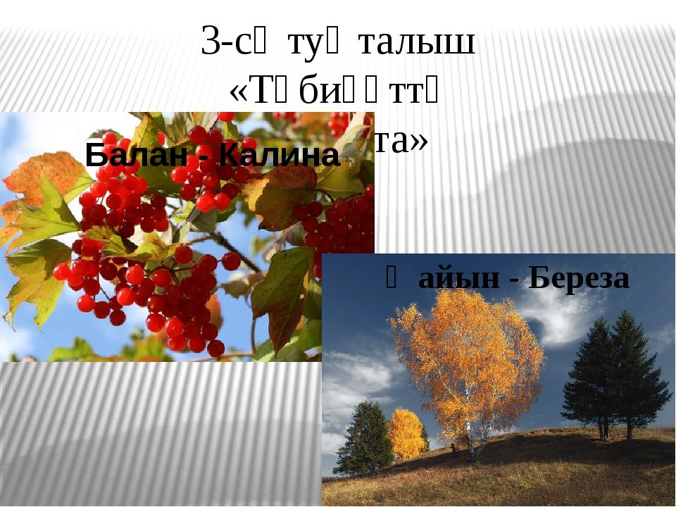 3-сө туҡталыш «Тәбиғәттә ҡунаҡта» Балан - Калина Ҡайын - Береза