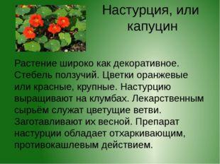 Настурция, или капуцин Растение широко как декоративное. Стебель ползучий. Цв