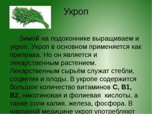 Укроп Зимой на подоконнике выращиваем и укроп. Укроп в основном применяется к