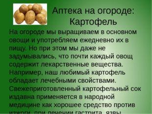 Аптека на огороде: Картофель На огороде мы выращиваем в основном овощи и упот