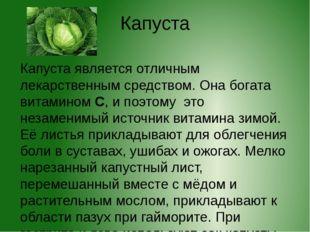 Капуста Капуста является отличным лекарственным средством. Она богата витамин