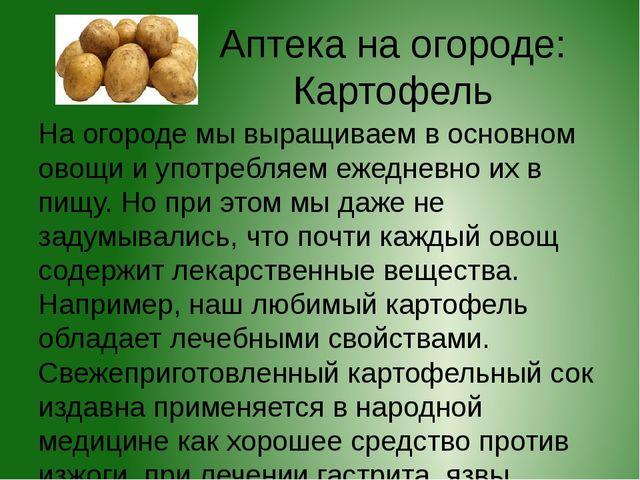 Аптека на огороде: Картофель На огороде мы выращиваем в основном овощи и упот...
