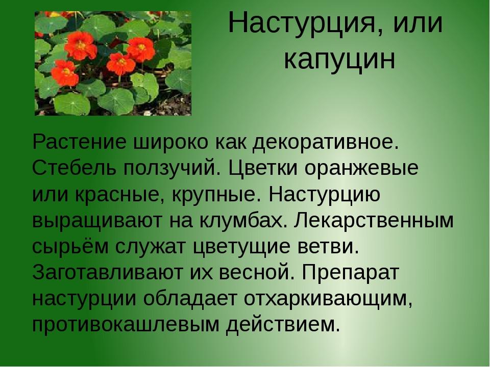 Настурция, или капуцин Растение широко как декоративное. Стебель ползучий. Цв...