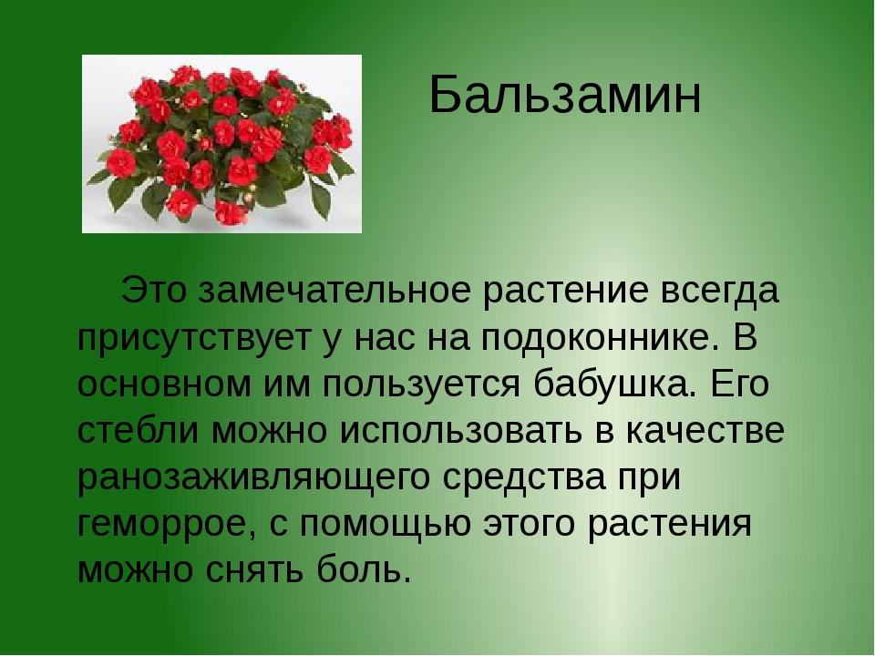 Бальзамин Это замечательное растение всегда присутствует у нас на подоконнике...