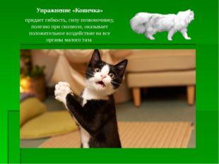 Упражнение «Кошечка» придает гибкость, силу позвоночнику, полезно при сколиоз