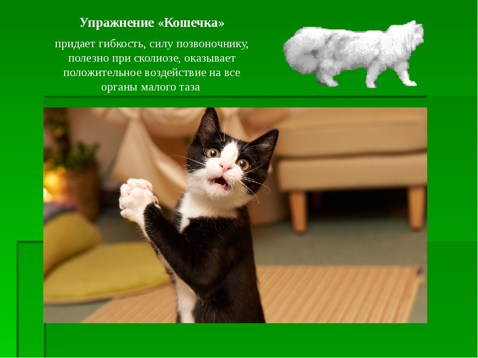 Упражнение «Кошечка» придает гибкость, силу позвоночнику, полезно при сколиоз...