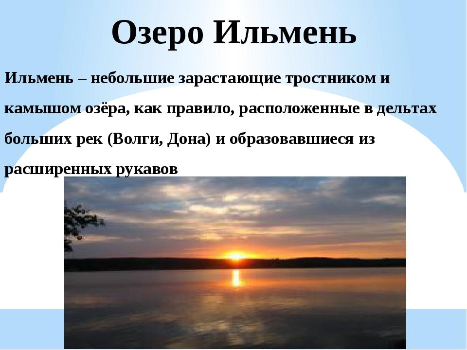 Ильмень – небольшие зарастающие тростником и камышом озёра, как правило, расп...