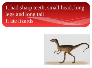 It had sharp teeth, small head, long legs and long tail It ate lizards