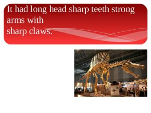 It had long head sharp teeth strong arms with sharp claws.