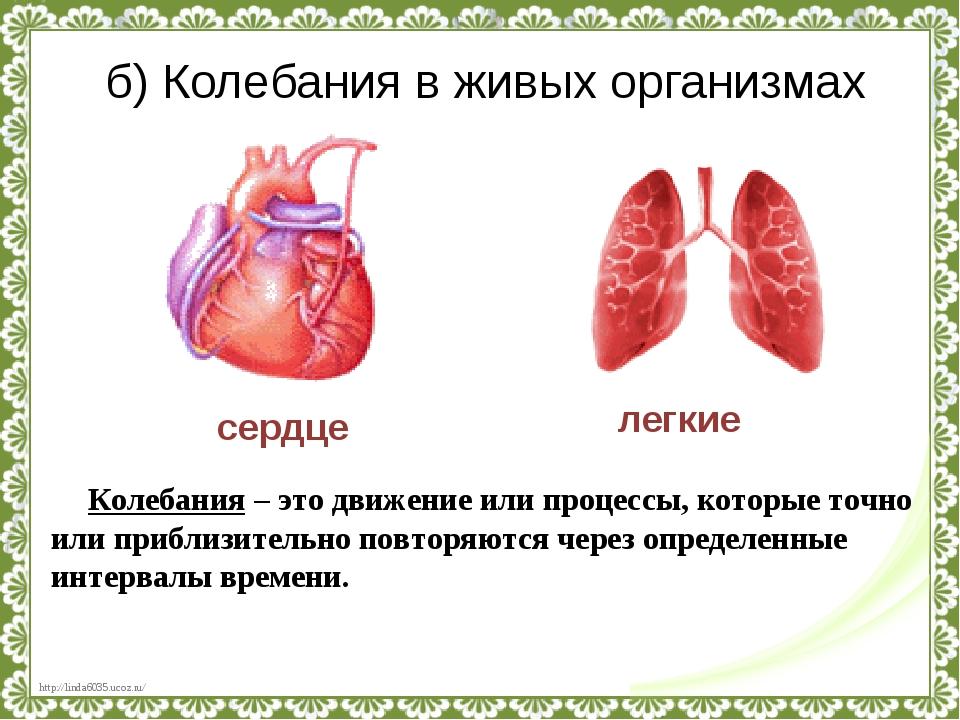 б) Колебания в живых организмах сердце легкие Колебания – это движение или пр...