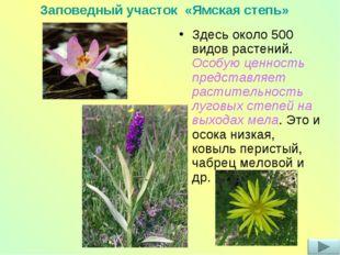 Здесь около 500 видов растений. Особую ценность представляет растительность л