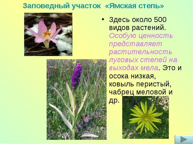 Здесь около 500 видов растений. Особую ценность представляет растительность л...