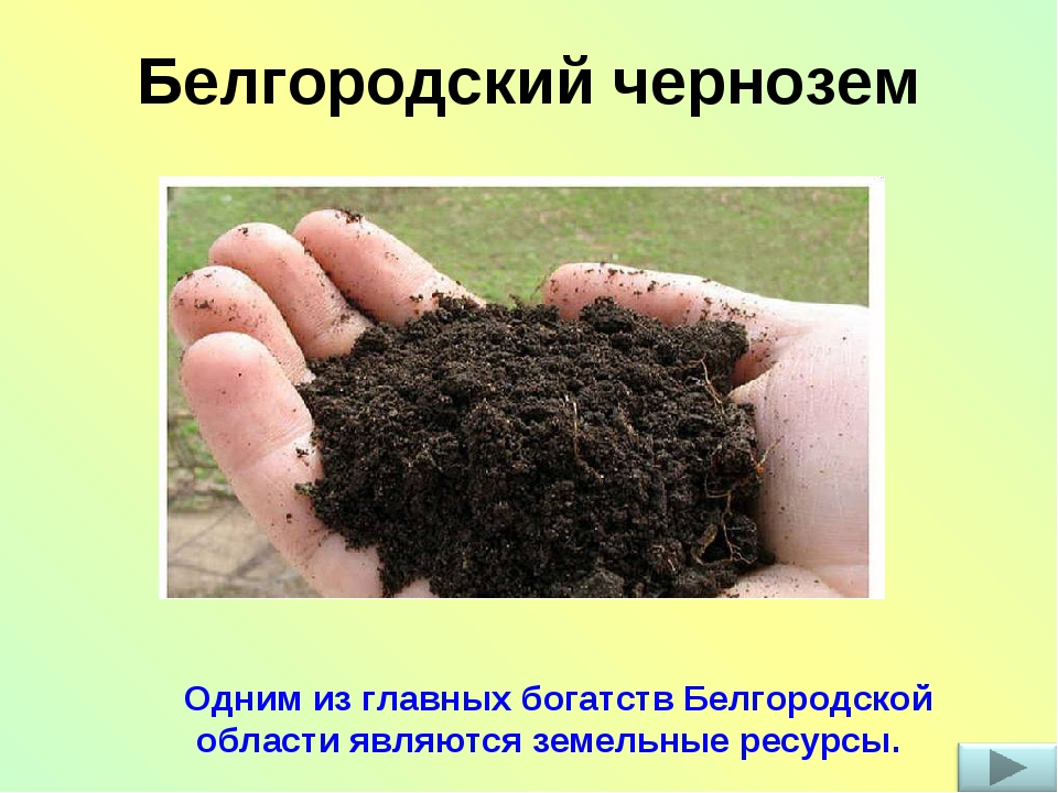 Белгородский чернозем Одним из главных богатств Белгородской области являются...