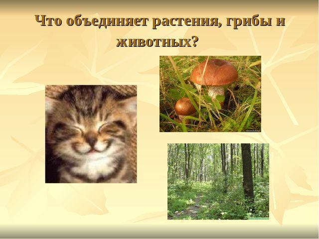 Что объединяет растения, грибы и животных?