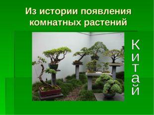 Из истории появления комнатных растений
