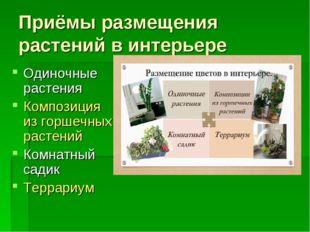 Приёмы размещения растений в интерьере Одиночные растения Композиция из горше