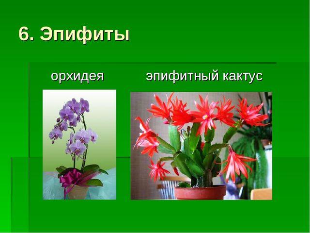 6. Эпифиты орхидея эпифитный кактус