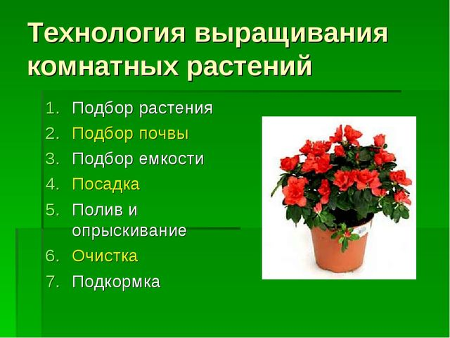 Технология выращивания комнатных растений Подбор растения Подбор почвы Подбор...