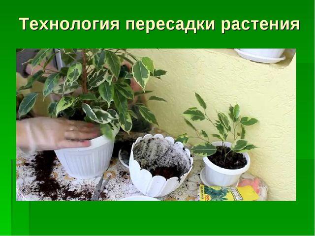 Технология пересадки растения
