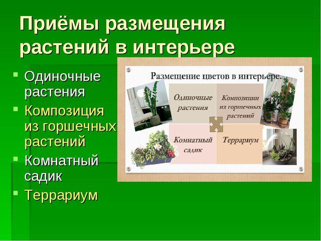 Приёмы размещения растений в интерьере Одиночные растения Композиция из горше...