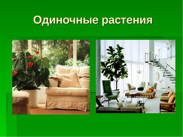Одиночные растения