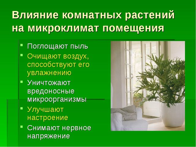 Влияние комнатных растений на микроклимат помещения Поглощают пыль Очищают во...
