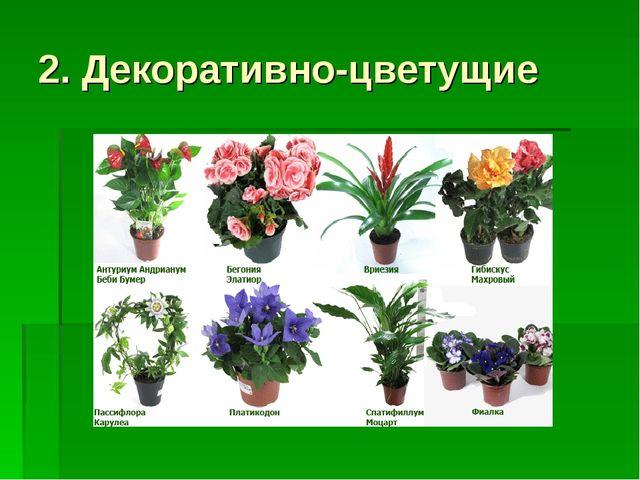2. Декоративно-цветущие