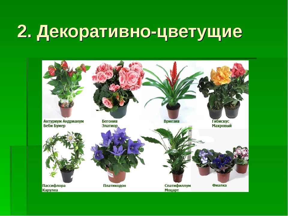 названия комнатных растений по фотографии дотошных