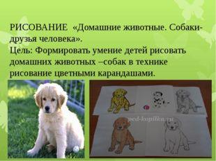 РИСОВАНИЕ «Домашние животные. Собаки-друзья человека». Цель: Формировать умен