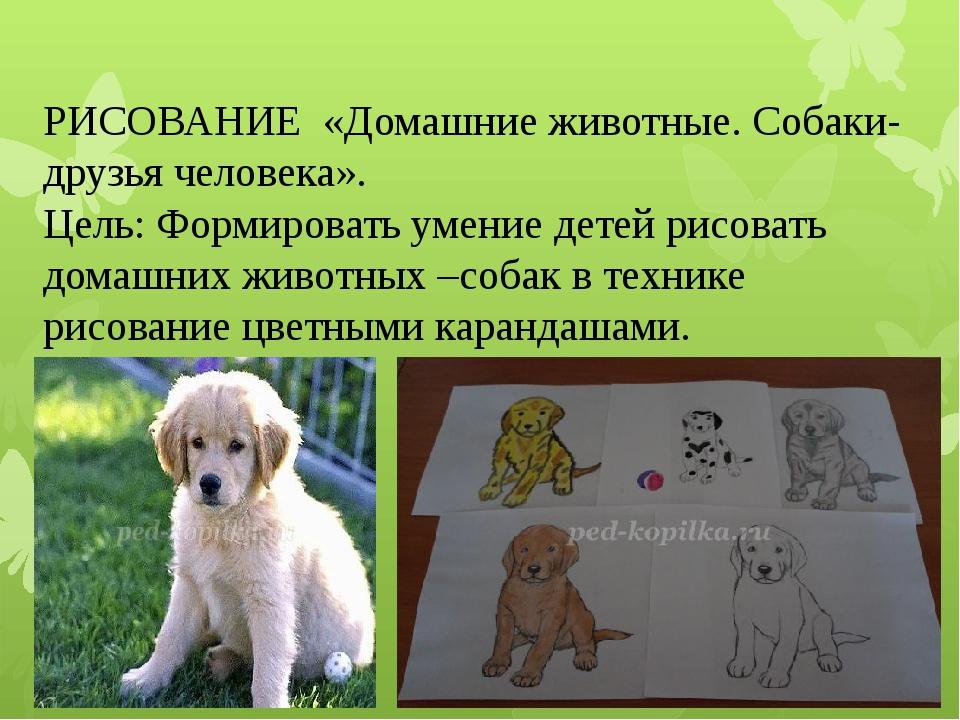 РИСОВАНИЕ «Домашние животные. Собаки-друзья человека». Цель: Формировать умен...