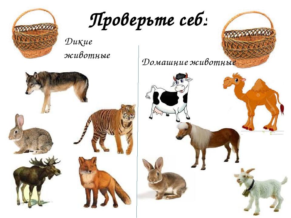 Проверьте себя Дикие животные Домашние животные