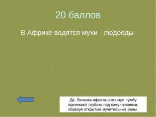 20 баллов В Африке водятся мухи - людоеды Да. Личинки африканских мух тумбу п